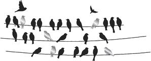 Ptaki ♥
